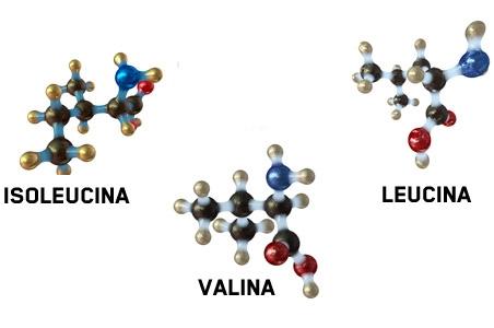 BCAA aminoácidos esenciales: Isoleucina, Valina y Leucina